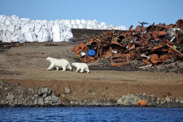 Работа поочистке Арктики поможет заключенным досрочно выйти насвободу