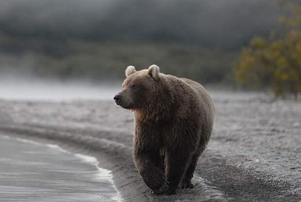 В орловском цирке во время шоу медведь набросился на беременную дрессировщицу