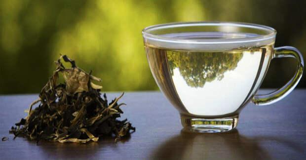 Преимущества белого чая для здоровья, о которых стоит узнать