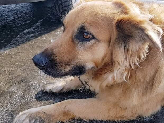 Хозяин предал пса. Он высадил его из машины и уехал!