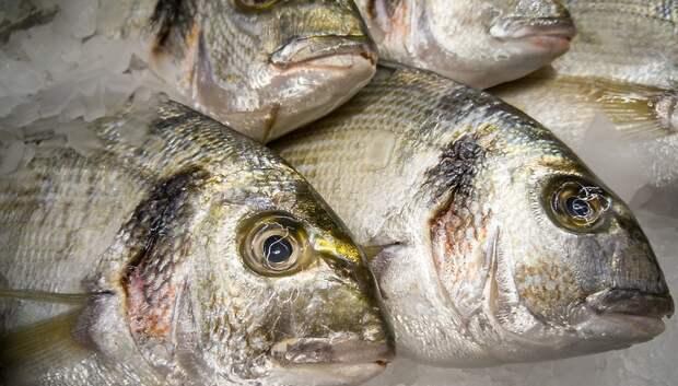 В Подмосковье за 2019 год произвели 5 тысяч тонн товарной рыбы