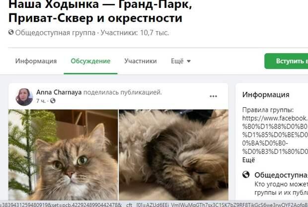 Неуловимая Мура с Чапаевского нашлась в диване