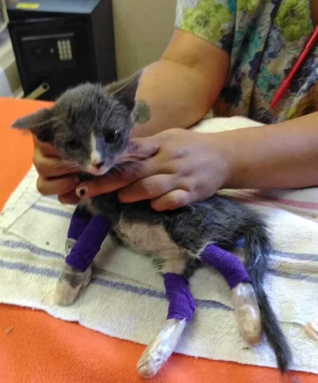 котенок с обожженными лапками