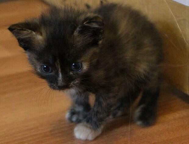 Над котенком, который беспомощно лежал в коробке, издевались равнодушные подростки
