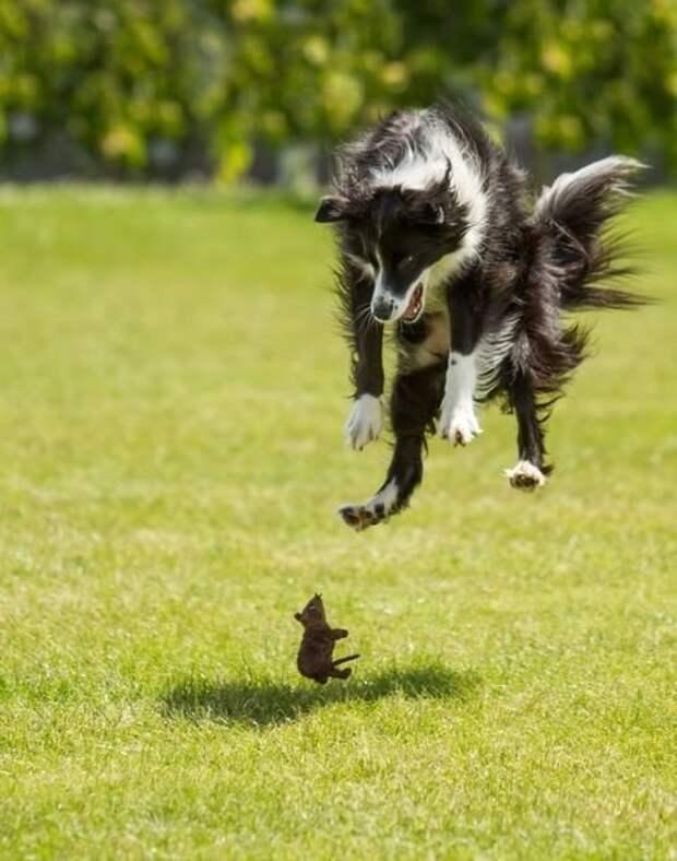 Собаки - это отдельная глава животные, красота, полет, природа, прыжок, удживительное