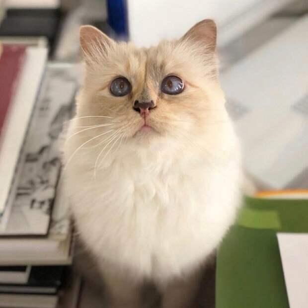 Это кот, но это я: адвокат обескуражил и повеселил коллег котиком вместо себя в приложении Zoom