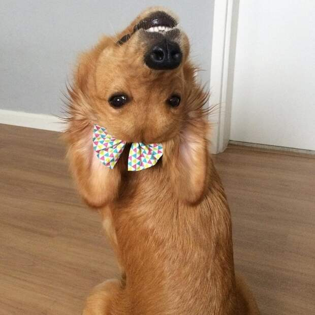 20 крутейших фотографий, которыми собаки могут гордиться