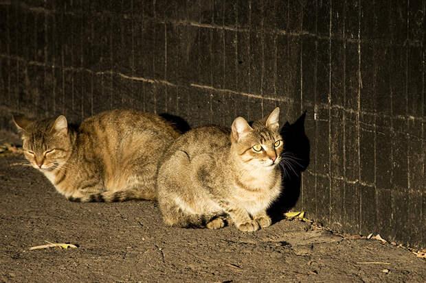Учёный назвал глупым решение Роспотребнадзора уничтожать кошек и собак из-за коронавируса