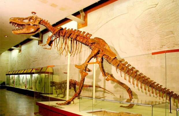 Рис. 8. Скелет тарбозавра (Tarbosaurus bataar). Самый крупный хищник имел длину до 12-14 м и рост 3-4 м. Вид открыл Евгений Александрович Малеев в 1955 г
