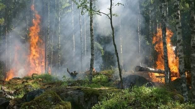 Высокий уровень пожарной опасности прогнозируется в пяти регионах России