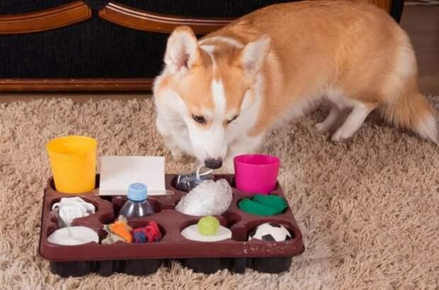 игрушка своими руками для щенка