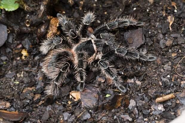 На Коптевской причинное место жителя пострадало от укуса ядовитого паука