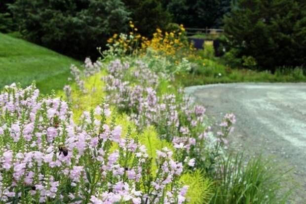 растения вдоль дороги