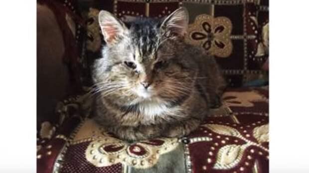 Хозяин переехал, бросив кота в подъезде. Он жил в картонной коробке, пока не выпал снег…