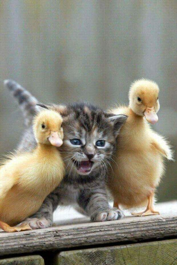 Позитивные зверюги! добро, животные, позитив