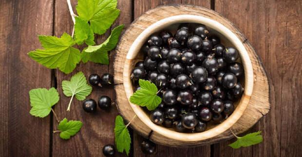 Почему в некоторых штатах США запрещено выращивать черную смородину