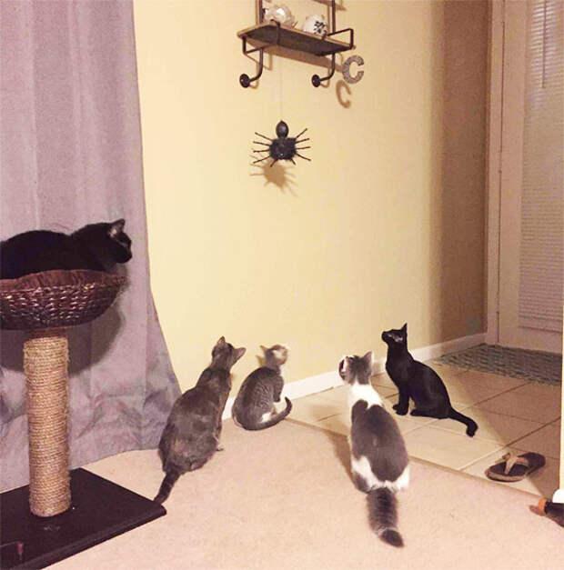 14. Заметили игрушку животные, жизнь, кот, питомец, семья, собака, фото