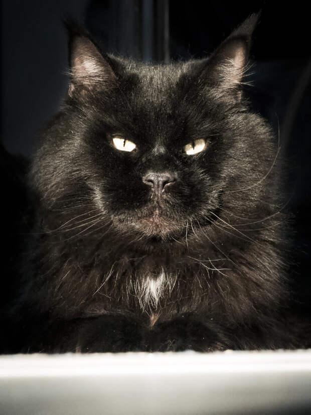 """""""Что вы мучаетесь, намочите коту хвост и спите спокойно!"""" Интересный совет, но насколько безопасный?"""