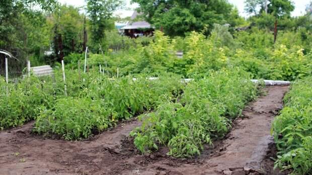 Россиянам напомнили про штрафы за некоторые виды растений на даче