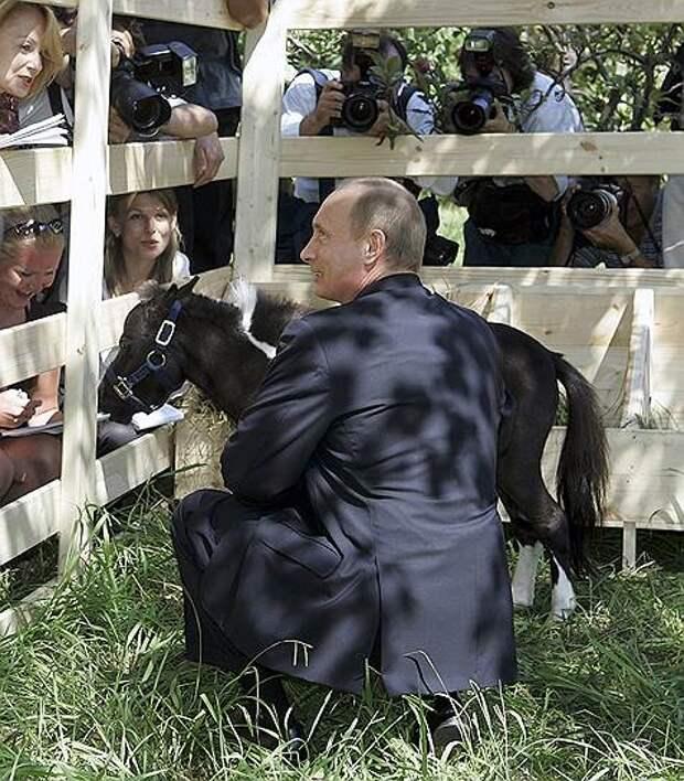 В 2005 году в Казани, где проходили международные соревнования по конному спорту, президент Татарстана Минтимер Шаймиев подарил Владимиру Путину карликовую лошадь, которую Назвали Вадиком