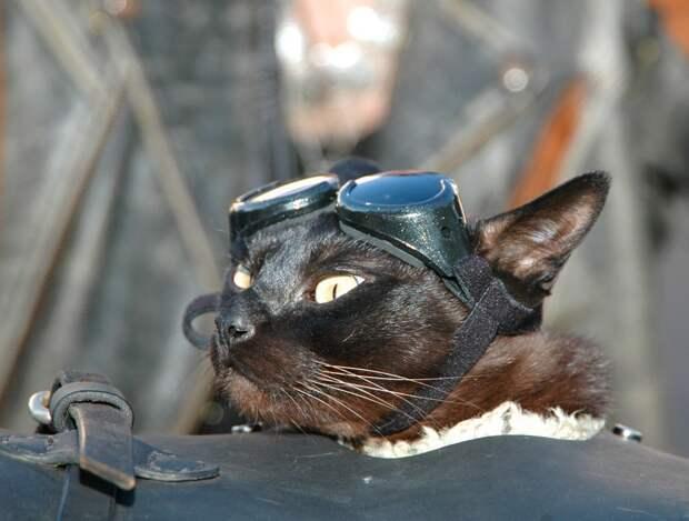 Кот байкера: фото верных спутников любителей скорости и ветра