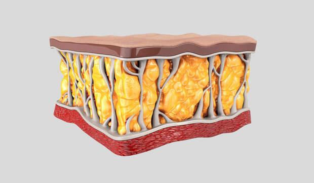 Подкожный жир —как от него избавиться без спорта и тренировок?
