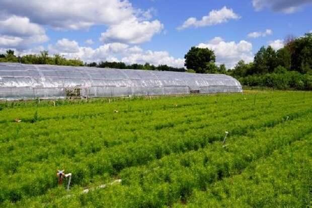 В Тамбовской области подведены итоги искусственного лесовосстановления