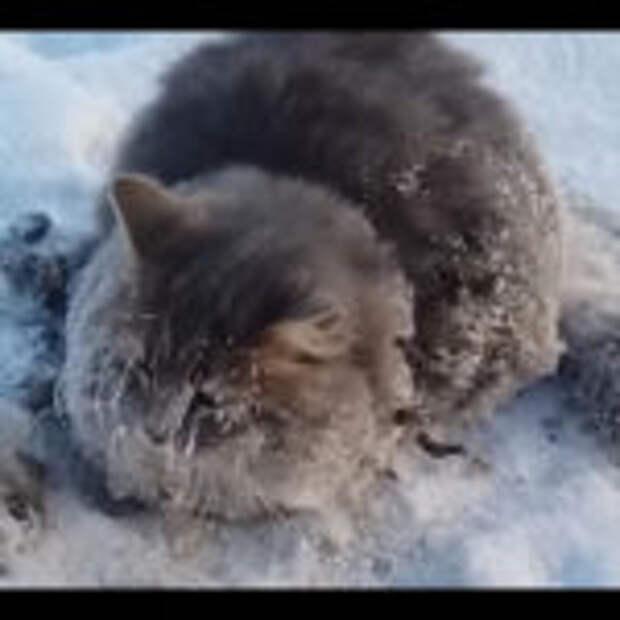 Замерзающую кошку спасли от мучительной смерти