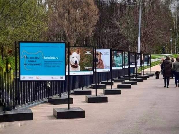 В cквере по Олонецкому  проходит фотовыставка бездомных животных