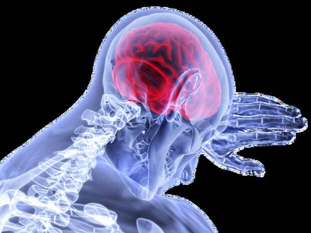 Ученые из Швеции нашли простые способы замедлить старение мозга