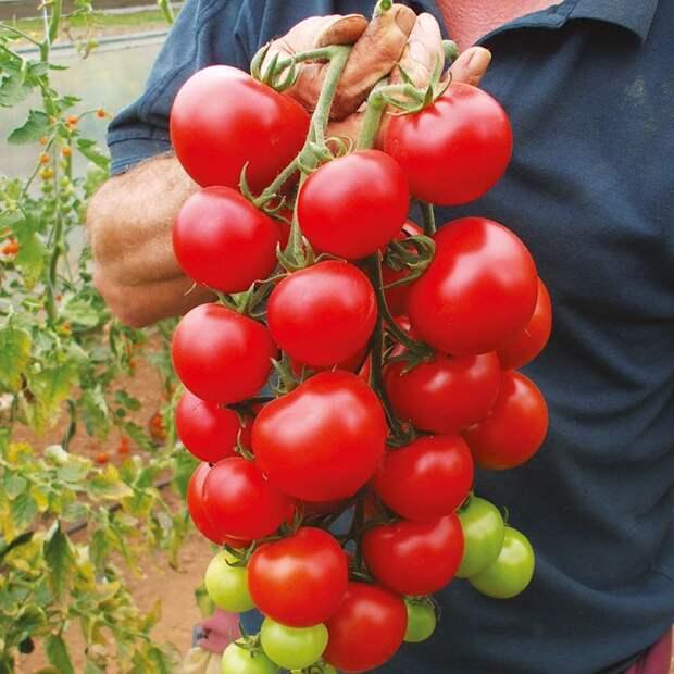 Картинки по запросу 200pcs/bag cherry tomato seeds,tomato seeds vegetable & fruit seeds no-gmo delicious cheap plant for home & garden
