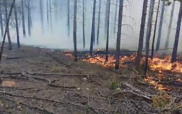 В Бурятии ликвидировали 7 лесных пожаров за последние сутки