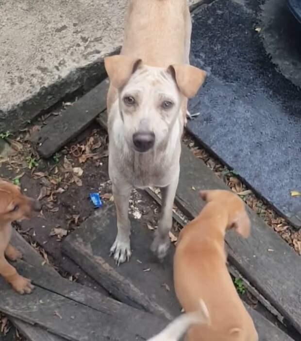 Мужчина поделился едой с собакой, но она ее не съела. Когда он увидел, куда она унесла ее, был поражен