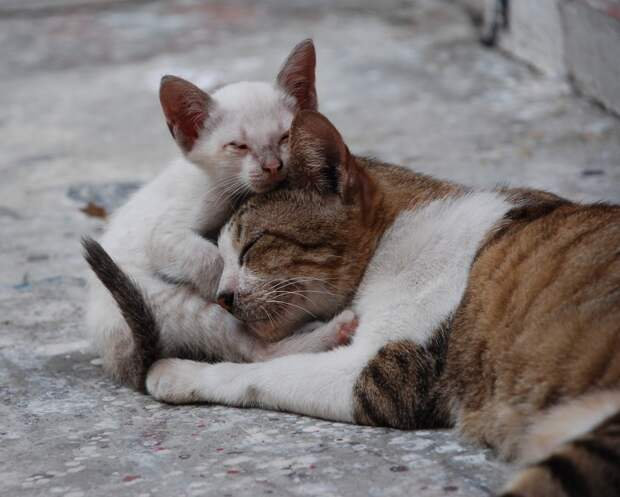 Если ваш домашний питомец потеряется в Японии, попросите помощи у бездомных кошек — они его найдут!