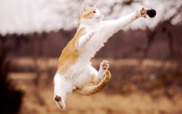 Тот момент когда летают те, кто летать не может животные, красота, полет, природа, прыжок, удживительное