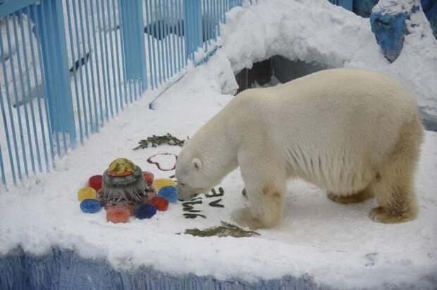 Екатеринбургский зоопарк ищет посетителя, виновного всмерти белого медведя