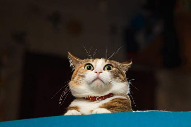 Испанский кот врубил музыку, а выключить не смог