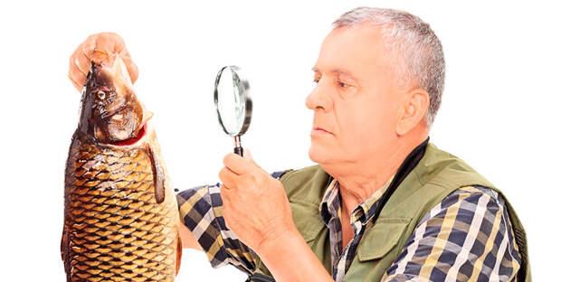 Определение возраста пойманной рыбы