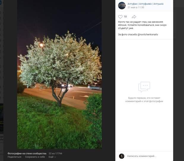 Фото дня: отцветающая яблоня в Алтуфьеве