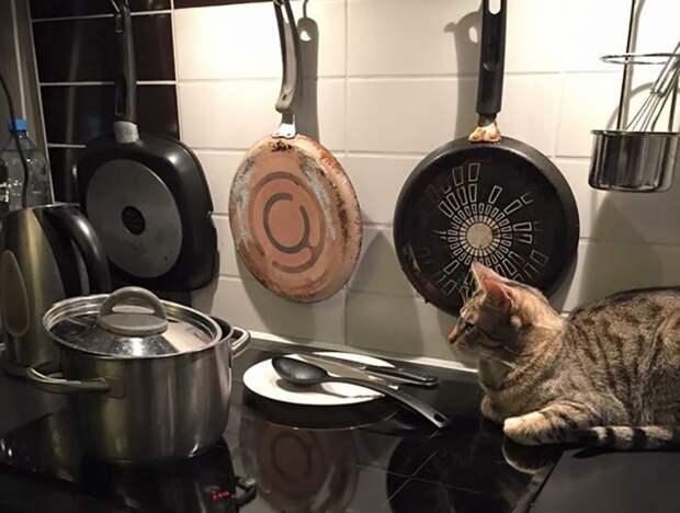 Холодец застыл еда, кот, кулинария, рецепты, холодец, юмор