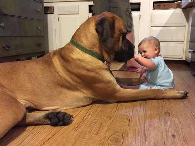 пес с ребенком
