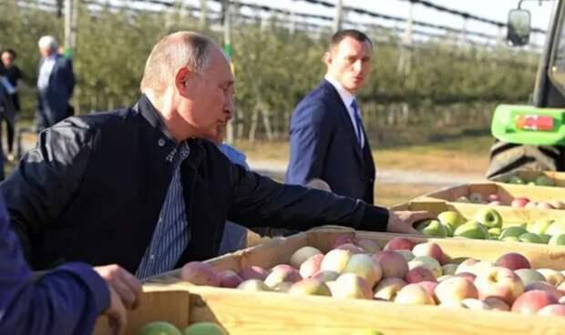 Польские фермеры в растерянности: Россия может подвинуть их с яблочного рынка