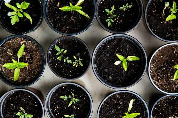 Что посеять в апреле? Часть 1. Список овощей на рассаду