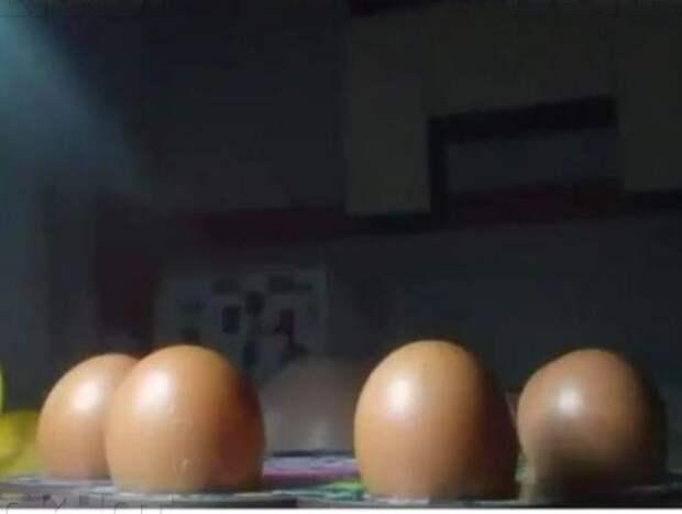 Лысые яйца картинка