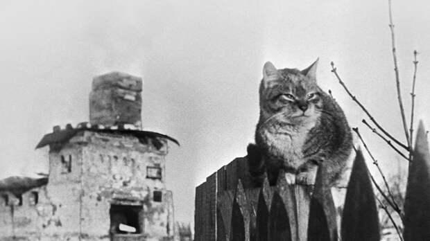 Коты Победы: как животные помогали пережить ужасы войны