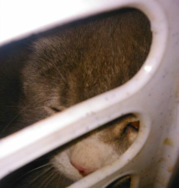 Из корзины для грязного белья, обмотанной скотчем, с укором смотрели глаза… Это прибыл счастливый кот!