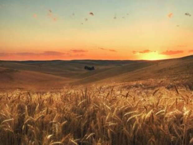 Фермер Билл. Основатель Microsoft стал крупнейшим частным владельцем сельхозугодий в США
