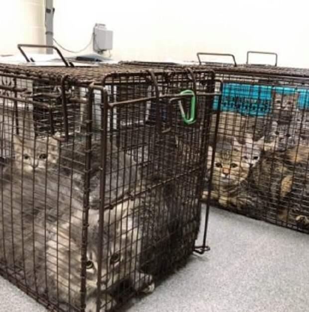 Клетки с котами