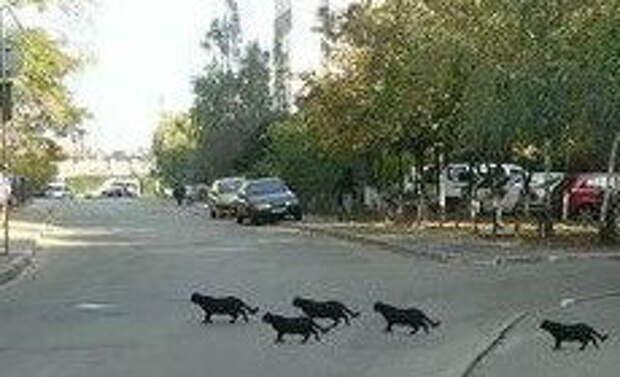 5 черных кошек