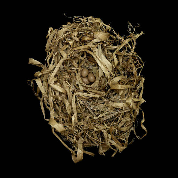 Шедевры природной архитектуры— птичьи гнезда